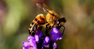 Für den Erhalt der Artenvielfalt